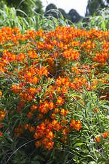 2017-06-18 Virginia Water Savill Gardens IMG_9120 (Darkstar Moody) Tags: virginiawater savillgardens plants flowers trees water ponds lakes wildlife gardens flora fauna