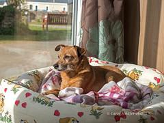 P4260113 a good view (sarasocke) Tags: cornwall beach coast england küste strand dog