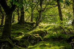 Hillside (Future-Echoes) Tags: 4star 2017 dolgoch grass green hillside light nature rocks trees wales