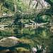 Living root bridges - 1