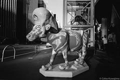 Avenida Paulista, SP (Celso Kuwajima) Tags: sculpture people art ilfordhp5 street streetphotography analogphotography leicam4 outdoor bw 20170528 leicasuperangulon13421mm cow sãopaulo brazil br epsonv800 silverfastai