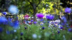Change (ΞSSΞ®®Ξ) Tags: ξssξ®®ξ pentax k5 colors bokeh 169 smcpentaxm50mmf17 italy spring 2017 plant outdoor tree depthoffield blossom purple green light fabriano appennini nature flowers meadow focus grass pov perspective dof marche flower garden change