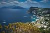 2017 Capri