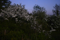 SPC_2332 (seansverige) Tags: moonlight naturallightphotography nocturnalphotography longexposure