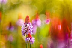 Feel like I do (hploeckl) Tags: flower flowers fantasy colors diaplan d750 nikon nature natur artistic abstract av colorful