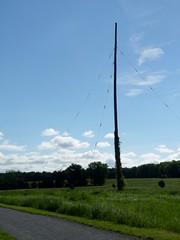 Last pole standing (Dendroica cerulea) Tags: pole utilitypole antenna trail path field spring reedbryanfarm polefarm mercermeadows lawrencetownship mercercounty nj newjersey