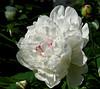 Floral Intermezzo (roksoslav) Tags: zagreb croatia 2017 nikon d5100 sigma70mmf28 spring proljeće 70mm iso800 f18 1640sec