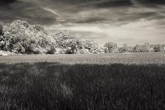 Bucolic (enneafive) Tags: bucolic rural pastoral landscape jesseren borgloon belgium fujifilm xt2 limburg