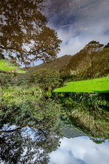 Reflection (Kathrin & Stefan) Tags: bush cloud grass mirror nature outdoor plant puddle reflection sky tree aucklandwaitakere northisland newzealand