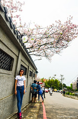 DSC_4461 (Frankie Tseng (法蘭基)) Tags: yms taipei taiwan flower flowers nikon cherryblossoms summer spring 2017 abstract blur bw bwphotography blackwhite yangmingshan 台北 櫻花 陽明山 台灣 抽象
