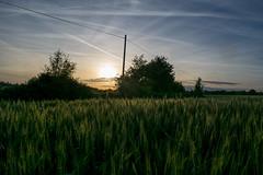 Champs_Vendée-1 (Nikotcho) Tags: vendée champs coucherdesoleil campagne ble cereales