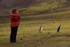 Penguins at Bailey Head (Scott Ableman) Tags: shetlandislands baileyhead chinstrappenguins chinstrappenguin chinstrap penguin nationalgeographicexpeditions lindbladexpeditions nationalgeographicorion antarctica parkas orange orangeparka