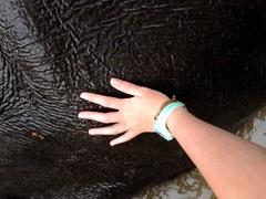 Douche et caresse à l'éléphant - GlobAlong (infoglobalong) Tags: sri lanka éléphants animaux aide animalier bénévolat asie excursions pêcheurs mahout bain cultures