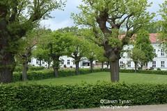 s170523a_3191+_Putbus (gareth.tynan) Tags: rügen binz bird rasenderroland prora putbus park sand sea stimmung