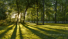 Morning stripes (Valley Imagery) Tags: floodcreek panorama sigma 35mm art sony a77ii morning contrast leonardtown maryland usa green spring