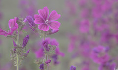 Flowers (Martine Lambrechts) Tags: flower nature macro