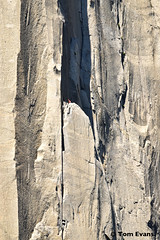DSC_5470 (steph_abegg) Tags: 2017 california notmyphotos steph