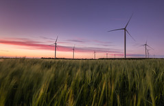 A Clean Scene (Rob Pitt) Tags: frodsham wind farm turbines monography cheshire helsby uk england rob pitt photography hill sky sunset graduated filter pink clouds field