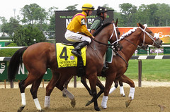 2016 Belmont Stakes Day (first_dude) Tags: belmontstakes nyra horseracing thoroughbred newyork