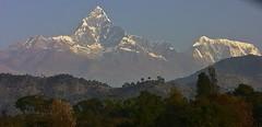 """NEPAL, Himalaya - Annapurna-Massiv  (z.T. mit Machapuchare """" Fischschwanz"""" ,  von Pokhara aus gesehen, (serie) 16184/8480 (roba66) Tags: annapurna annapurnamassiv himalaya himalayagebirge gebirge reisen travel explore voyages roba66 visit urlaub nepal asien asia südasien pokhara landschaft landscape paisaje nature natur naturalezza mountain berge range mountains montana felsen rock rocks gletscher eis ice berg fischschwanz fishtail machapuchare"""