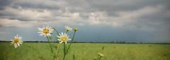 highest (zoran.ziza) Tags: oneplus shotononeplus cameraphone smartphone cell mobile phone photography snapseed macro nature flowers landscape