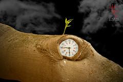 Le Linfe Vitali - IX (Winter Guest) Tags: photoshop linfevitali lifeblood elementovital élémentvital lebensnerv albero tree arbre baum árbol nuvole nubes nuages clouds wolken orologio clock arrelógiu horloge reloj uhr