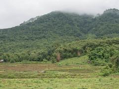 Lao 3-6110591 (luc ingelbrecht) Tags: laos vangvieng natuur tropischregenwoud
