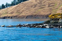 DSC_6024 (whibbles) Tags: washington pnw mountains seattle hiking rattlesnakeledge orcas whales orcasisland eagles wildlife