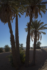 _P6A0621 (alby salerno fotografo) Tags: desierto mhamid zagora maruecos