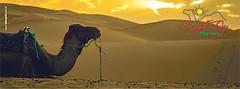 Camel Trip Marroco (Camel Trip Morocco) Tags: desert cameltrekking nomad merzouga chebbi morocco cameltrip camp bivouac marrakech camel travels trip tours night trekking camelridemorcco desertripfromfes