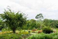 IMG_4400 (翔志) Tags: taiwan taoyuan fuxing shanggaorao valley garden taoyuanhsienku 桃源仙谷