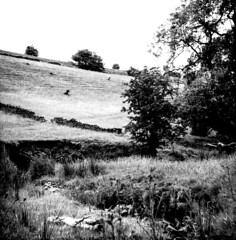 No particular place to go (Richie Rue) Tags: film analog analogue blackandwhite monochrome mono zeissikonnettar mediumformat 6x6 summer lazy balmy barmy afternoon relax secluded valley beck stream