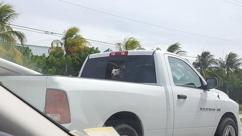 The happiest island dog