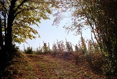 A vineyard (elkarrde) Tags: colour wideangle 2828 m42 focal mitakon focalmcauto128f28mm focalmc28mmf28 asahipentaxspotmaticsp asahipentax spotmaticsp pentax spotmatic screwmount dmparadiesaction400 paradies dmparadies action400 paradies400 400asa malunje malunjevillage jastrebarsko croatia twop pentaxart justpentax vineyard trees forest nature autumn november 2009 autumn2009 november2009 autumncolors plustek opticfilm plustekopticfilm8100 opticfilm8100 vuescan camera:brand=pentax camera:brand=asahipentax camera:model=spotmaticsp camera:format=135 camera:type=slr camera:mount=m42 lens:brand=focal lens:manufacturer=mitakon lens:mount=m42 lens:model=mcauto128f28mm lens:focallength=28mm lens:maxaperture=28 film:brand=paradies film:brand=dmparadies film:basesensitivity=400asa film:ei=400 film:model=action400 film:format=135 scanner:brand=plustek scanner:model=opticfilm8100 scanner:software=vuescanx6495 location:country=croatia location:city=malunje jastrebarskocounty film analog analogue filmphotography analogphotography analoguephotography filmisnotdead filmisalive