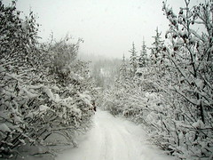 CAN YOU IMAGINE BEING HERE?  POWDER SNOW...LOVELY TRAIL...JUST THE BEST! REVELSTOKE,  BC. (vermillion$baby) Tags: blackandwhite done forest fun ice snow snowmobiling trees treestree tulameenarea winter snowf revelstokef