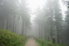 Walking into the white (padografie) Tags: blackforest fog sony alpha7 mystical schwarzwald mummelsee hornisgrinde