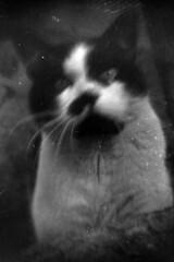 01_12 (maruebe) Tags: recesky ilfordfp4plus125kleinbildsw1251002selbstabgepackt ilfordfp4plus 17mfilm selbstabgepackt kleinbildfilm kleinbild schnellscan schnellscans gescannt scan scanner scanned rolleiscan rolleidfs100se schwarzweis schwarzweiss sw blackandwhite bw analog analogue film analogerfilm analoguefilm abgelaufenerfilm abgelaufen expiredfilm expired lomo lomographie lomografie lomographics hochformat f17m gelsenkirchen germany deutschland marionüberschaer marionueberschaer cmarionüberschaer cmarionueberschaer maruebe lomography katze cat haustier pet tier animal
