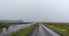 still raining (dustaway) Tags: landscape road rogersonroad sugarcane water rain overcast australianweather winter richmondvalley northernrivers nsw australia australianlandscape ruralaustralia rurallandscape