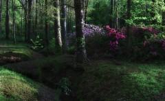 just imagine... (Alvin Harp) Tags: march 2016 georgia restarea forest trees latelight springblossoms springcolors spring lightandshadow verygreen sonyilce7rm2 fe24240mm i75 calhoun alvinharp