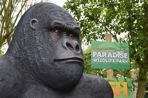 Paradise gorilla