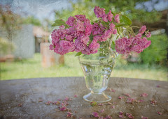 22 maggio 2017, variazioni su un vaso di fiori (adrianaaprati) Tags: garden spring may roses ancientroses home house flowerpot textured evelynflint outdoor stilllife