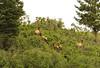 New Mexico Elk Hunt 24