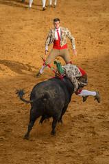 Forcados 332 (_Rjc9666_) Tags: alentejo bull bullfight estremoz forcados nikond5100 pega portugal tamrom70200f28 bullring ©ruijorge9666 évoradistrict pt 1808 332