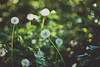 . (ammoniumchlorid) Tags: bokeh canon canoneos6d flowers flora green nature natureycrap ef50mmf114
