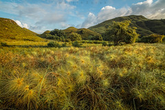 Indonesia (Martin Zurek) Tags: komodo indonesia sunrise sun light sunlight grass granssland nature landscape illumination yellow hills sky clouds 5dsr zeiss distagont2815 ze padar pulau flores island