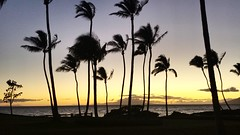 Hawaiian Sunset (brp1113) Tags: kauai ocean scenic palmtrees hawaii dusk sunset island tropical pacific evening