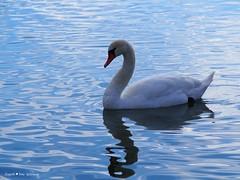 swan-lake-of-jarun_