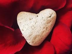 Bury my heart among the fallen petals of your love (saudades1000) Tags: red rouge vermelho heart love lamour valentine heartrock heartbroken