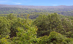 Trees for days (ShannonVanB) Tags: browncountystatepark nashville indiana statepark trees landscape spring