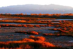 Red Maharloo (Mahmoud R Maheri) Tags: landscape maharloo iran lake mountain bushes sunset shiraz